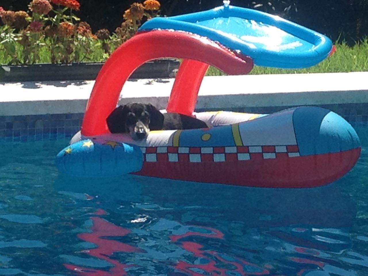 vacanze con cane e gatto in Italia e all'estero