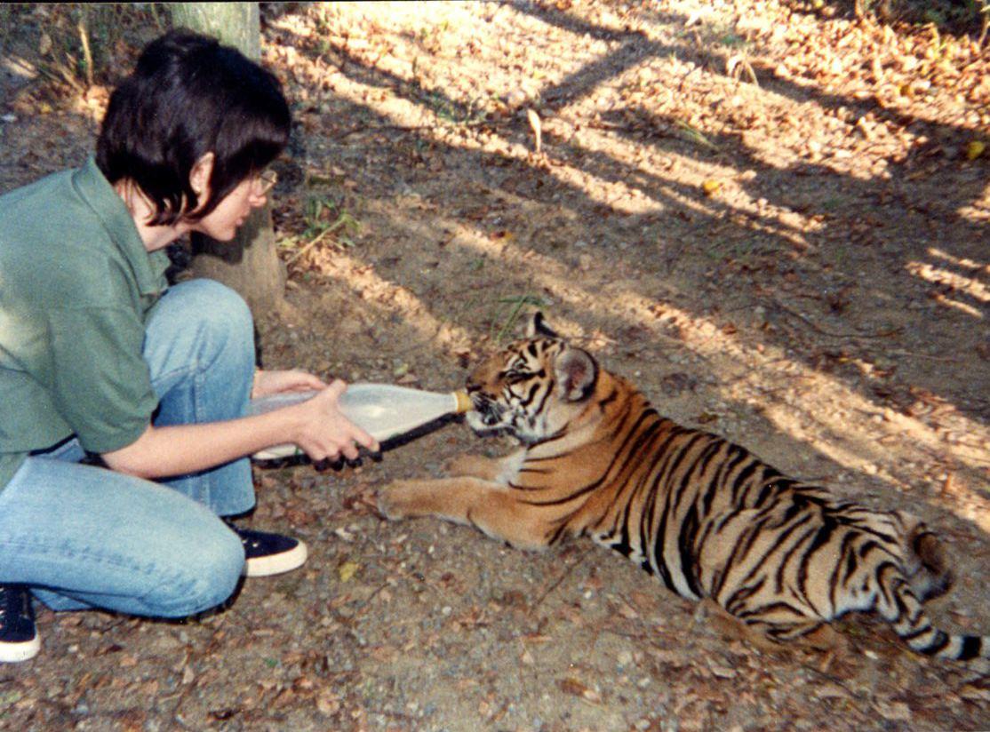 donna che allatta tigre di un parco safari