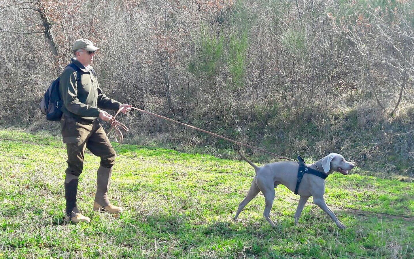 foresting ovvero cane con uomo nel bosco