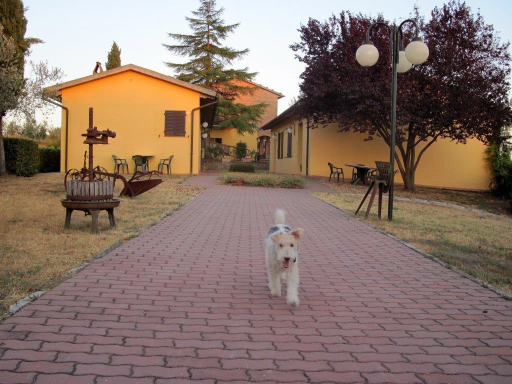 15 agriturismi in Italia che ospitano cani e gatti