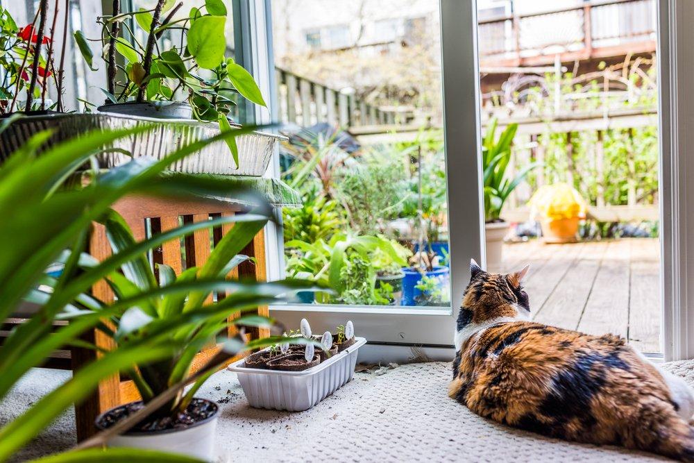 gatto con aloe vera che va bene anche per gli animali