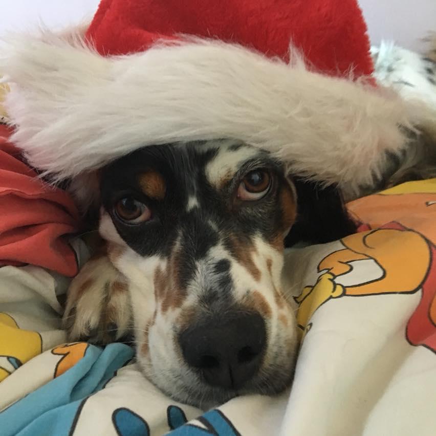 il cane è stressato