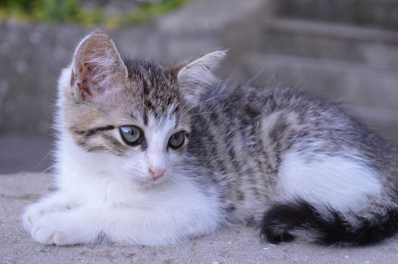 gatta che ha messo pace in famiglia