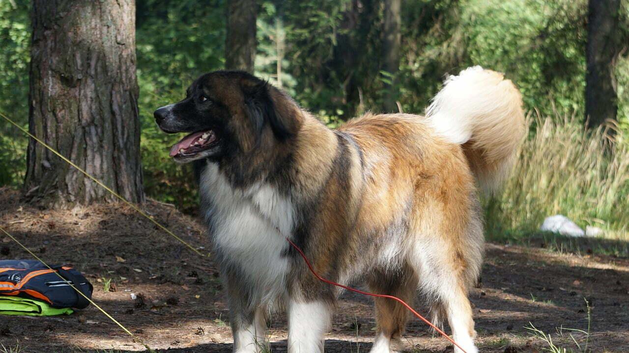 10 campeggi in italia che ammettono cani e gatti