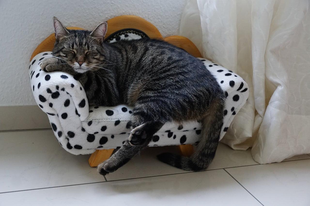 un gatto sulla poltrona: strutture alberghiere che accettano animali negli stati uniti