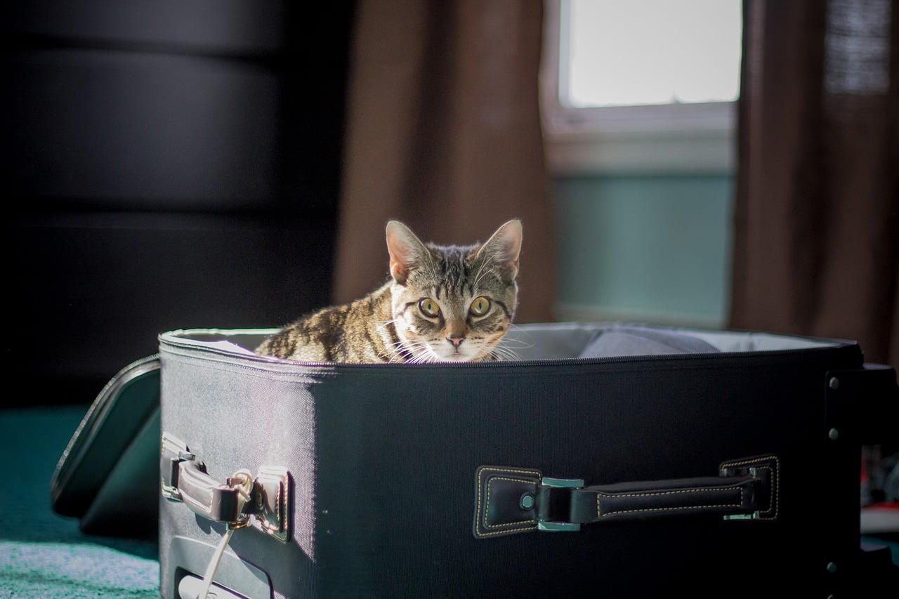 gatto in valigia: come organizzare un viaggio in aereo con un animale