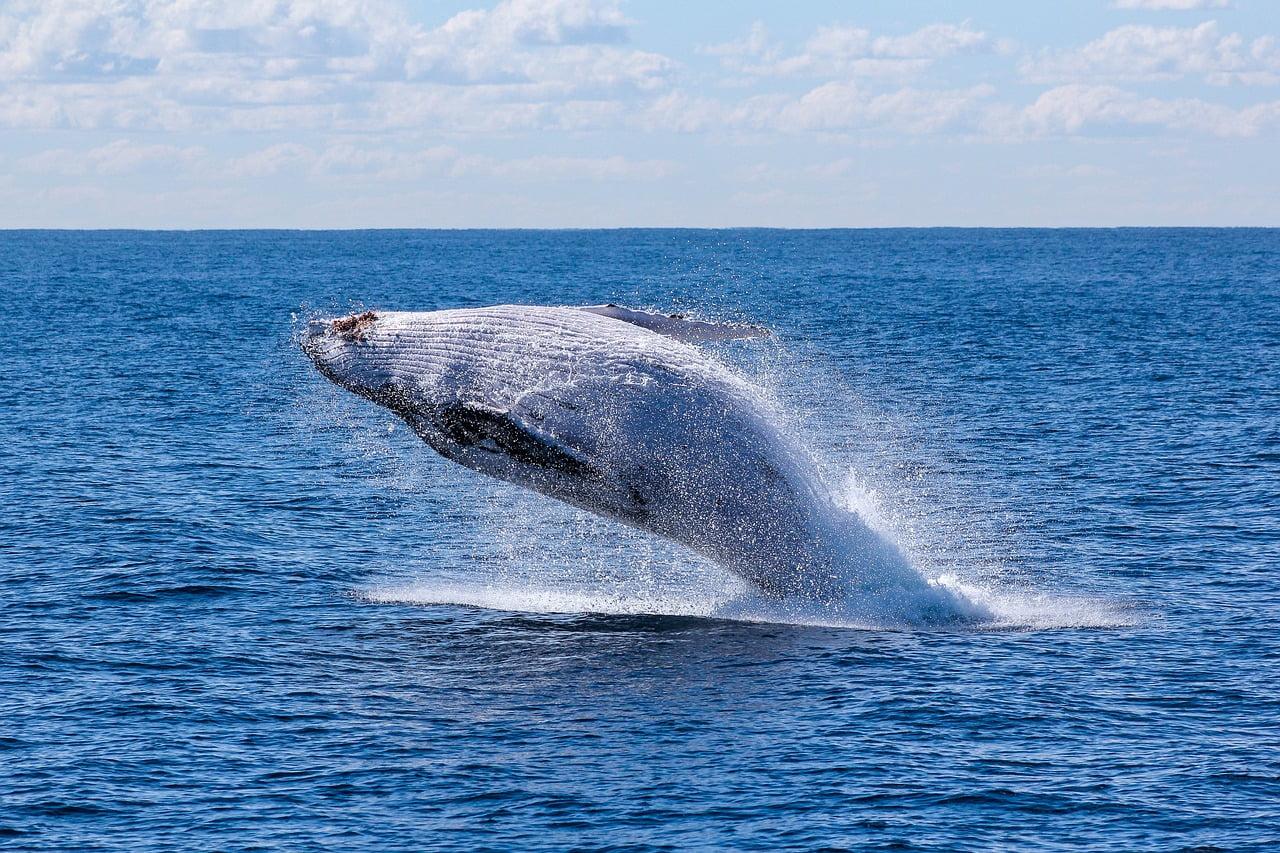 nuotare con le balene