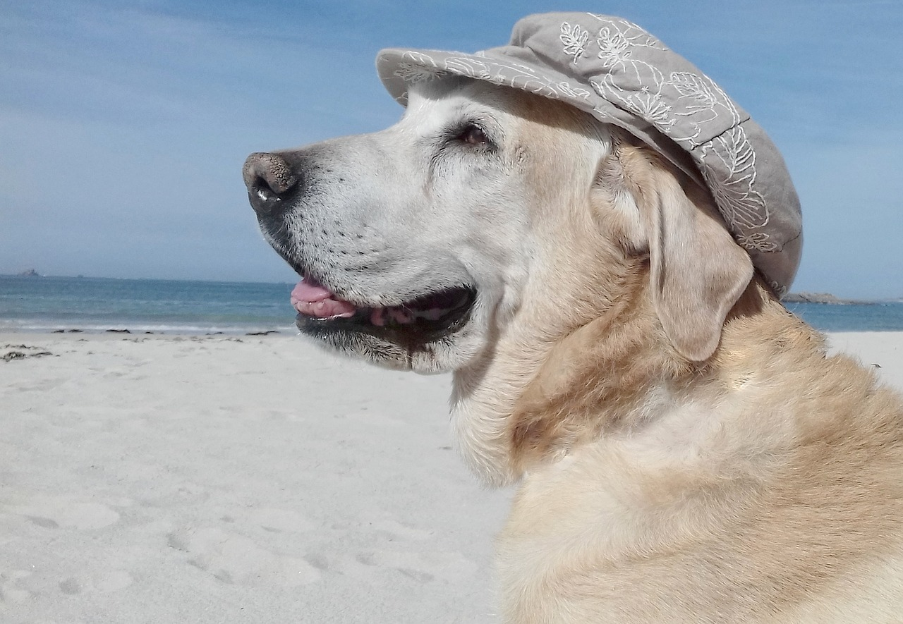 paesi pet friendly: cane con cappello al mare