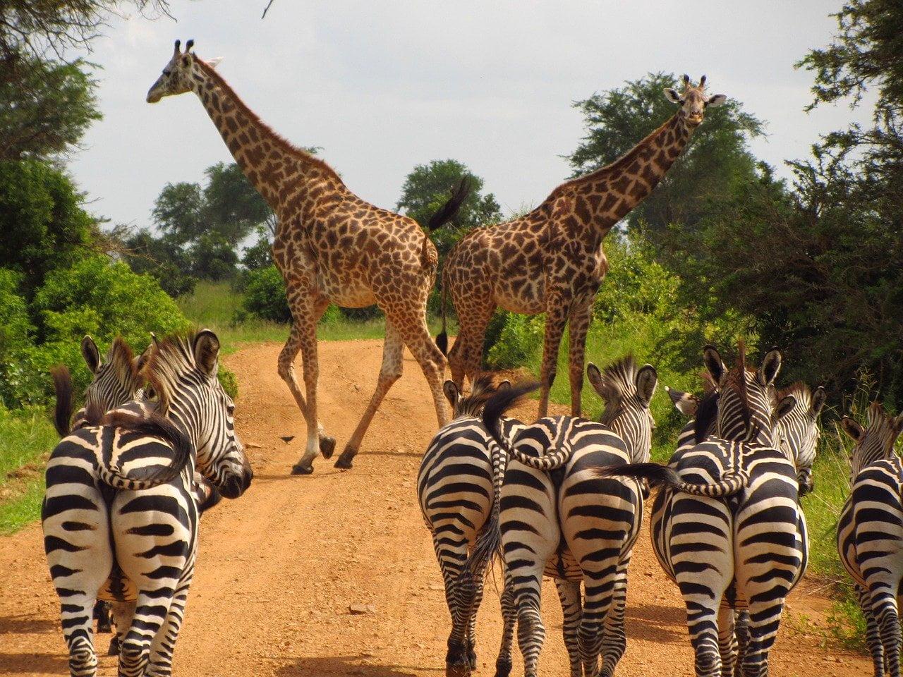 Safari tra i parchi della Tanzania ad agosto