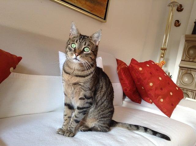 come impedire che il gatto urini su letto e divano