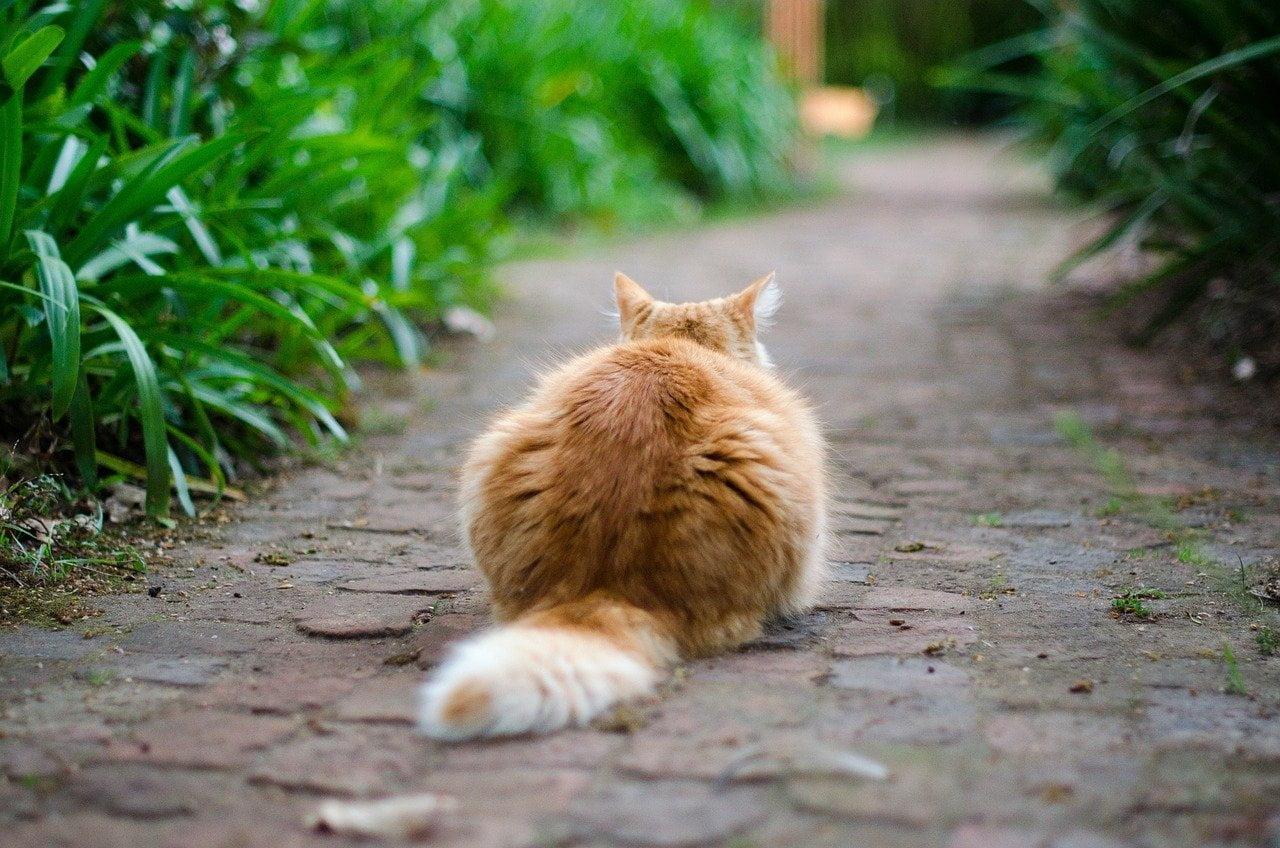 Cosa comunica la coda del gatto